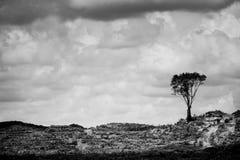 deforestation Royaltyfria Bilder