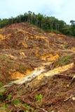 Deforestation royalty free stock images