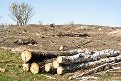 Deforestation. Photo with deforestation at north ukraine Stock Image