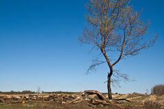 Deforestation royaltyfri bild