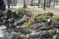 Deforestation. In the park with destroyed trees Stock Photos