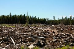 Deforestation Royalty Free Stock Image