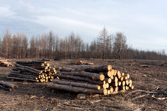Free Deforestation Stock Photos - 26146113