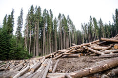 Deforestation. Illegal logging in Parang Mountains, Romania Stock Image