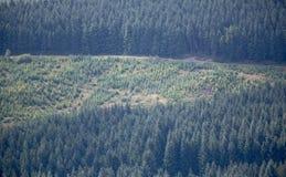 deforestation Fotografía de archivo libre de regalías