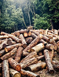 Deforestation Royalty Free Stock Photo