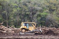 deforestation Foto de Stock Royalty Free