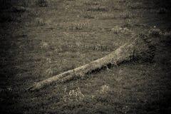 deforestation Arkivfoton