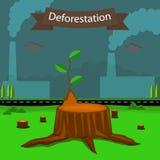 deforestation Royaltyfria Foton