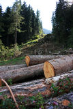 Deforestation Royalty Free Stock Images
