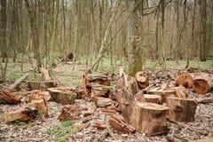 deforestation imagenes de archivo