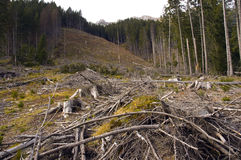 Deforestation. Chopped trunks and branches of trees in Romanian Carpathians royalty free stock photos