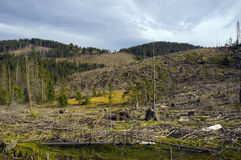 Deforestation. Chopped trunks and branches of trees in Romanian Carpathians stock photo