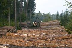 deforestation Foto de archivo libre de regalías