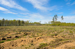Free Deforestation. Royalty Free Stock Image - 94237716