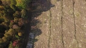 Deforestation aerial drone view. Environmental destruction, logging. Big felled, chopped and sawed tree trunks stored in