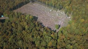 Deforestation aerial drone view. Environmental destruction, logging. Cutting down pine forest with lying trunks on