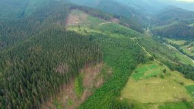 Deforestation. Aerial drone view of forest destroyed Ukrainian Carpathians stock footage