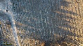 Deforestation aerial shot, flying over cut down trees, ecological catastrophe