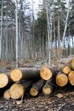 Deforestation area in forest with logs Stock Photos
