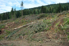 Deforestation in british columbia Stock Images