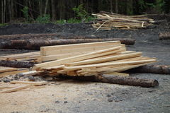 Deforestation in canada. Royalty Free Stock Photo
