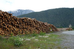 Deforestation in canada. Royalty Free Stock Images