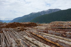 Deforestation in canada. Royalty Free Stock Photography