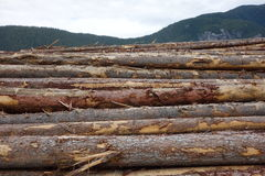 Deforestation in canada. Stock Photos