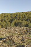 Deforestation in the Chilean Andes. Stock Image