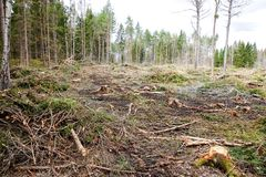 Deforestation / Clearcutting royalty free stock photos