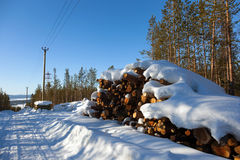 Deforestation in the clearing of power line Stock Photos