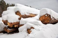 deforestation Colheita da madeira serrada Registros sob a neve Estoque da madeira em montes de neve do inverno da floresta fotos de stock royalty free