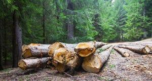 deforestation Cutted träd på sidan av skogvägen arkivfoton
