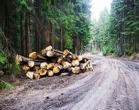 deforestation Cutted träd på sidan av skogvägen royaltyfria foton