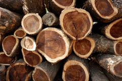 Deforestation, Cutted trees from the forest in Asia. Royalty Free Stock Photography