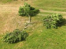 Deforestation Stock Images