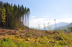 Deforestation disaster Royalty Free Stock Photo
