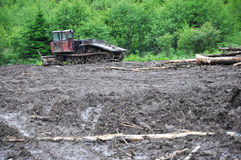 Deforestation disaster Royalty Free Stock Photography