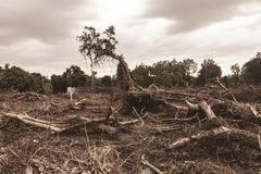 Free Deforestation Environmental Damage - Tropical Rain Forest Destroyed To Construction Stock Photography - 155950272