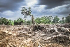 Free Deforestation Environmental Damage - Tropical Rain Forest Destroyed To Construction Stock Photography - 156163802