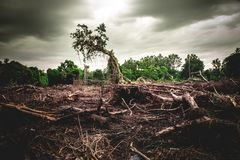 Free Deforestation Environmental Damage - Tropical Rain Forest Destroyed To Construction Royalty Free Stock Images - 156401499