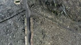 Deforestation, environmental destruction, aerial view, Poland. N stock video footage