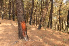 Deforestation and environmental  forest protection Royalty Free Stock Photography