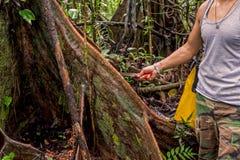 Deforestation Environmental Problem, Amazonia Rainforest Stock Photography