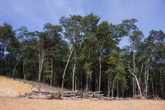 Deforestation environmental problem Royalty Free Stock Image