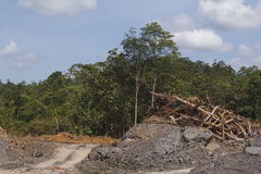 Deforestation environmental problem Royalty Free Stock Images