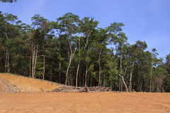 Deforestation environmental problem Stock Photography