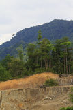 Deforestation environmental problem Stock Image