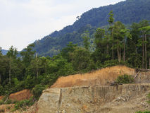 Deforestation environmental problem Royalty Free Stock Image